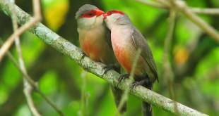 Was macht den perfekten Kuss aus